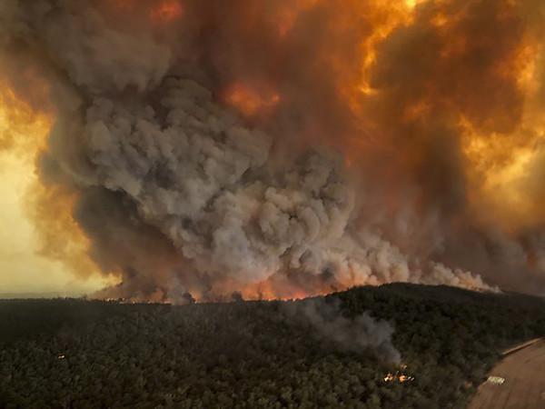 大量紅蘿蔔從天而降!挨餓岩袋鼠握緊狂嗑 澳洲拯救大火倖存動物