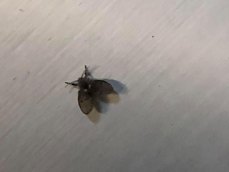 即將迎接新生兒!家中莫名冒出「大量黑蟲」殺不完 他崩潰:房間牆壁數十隻
