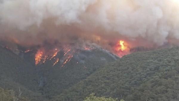 澳洲消防員「累趴草地」照片超鼻酸 掉男兒淚:大火好像沒有盡頭