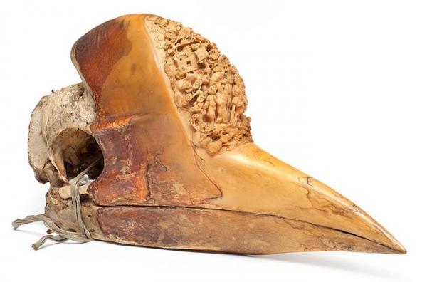 海關意外抓到這些比象牙還要珍貴的走私品,卻不知道到底「來自哪種動物」!直到發現「他的頭」整個嚇歪了!