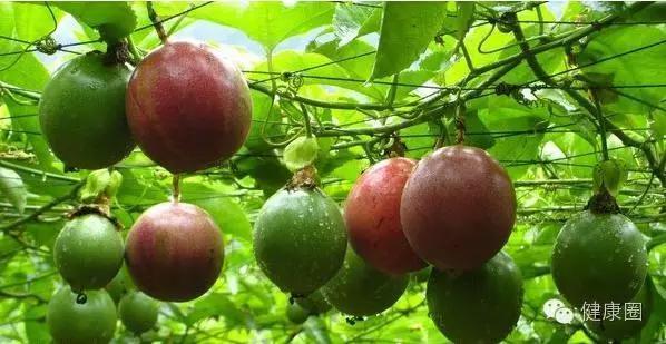 它是水果,卻被尊為「藥王」,獨有的8大功效,夏天吃對身體最好