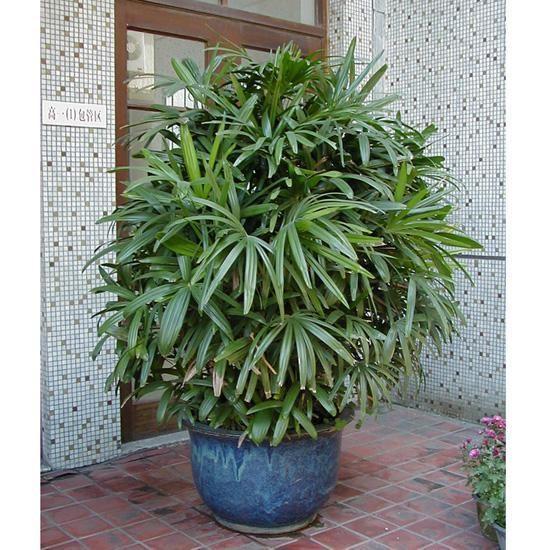 這10種植物可以凈化空氣,吸收有害物質,你家裡有嗎?