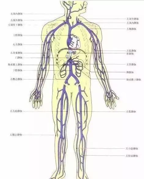 拉開身上「筋結」,體內百病去,專家獨門拉筋法,8~80歲都適用